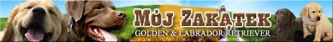Mój Zakatek, hodowla Golden & Labrador Retriever